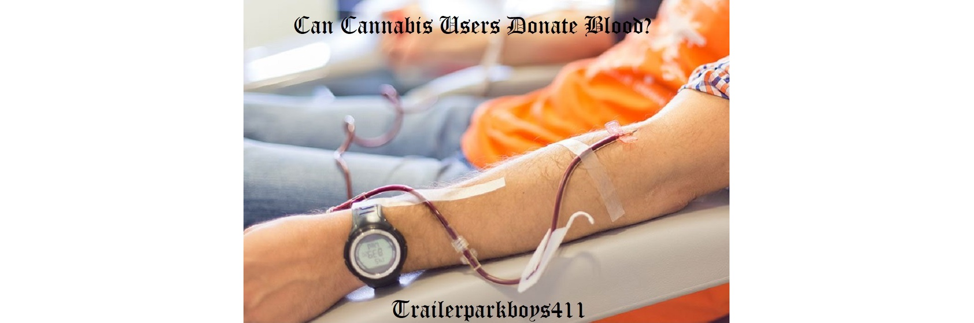 Can Cannabis Users Donate Blood