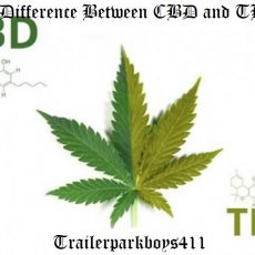 The Difference Between CBD and THC