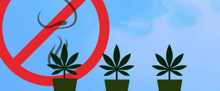 How to get rid of the smell of marijuana