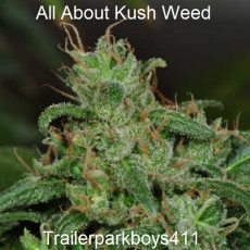 All About Kush Weed