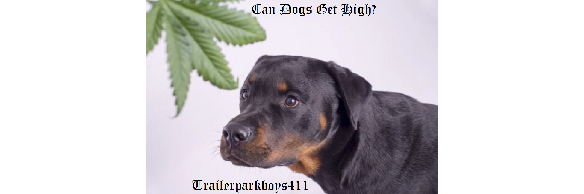 Can Dogs Get High