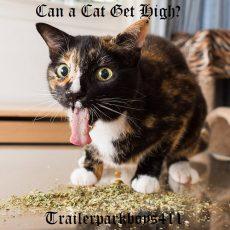 Can a Cat Get High