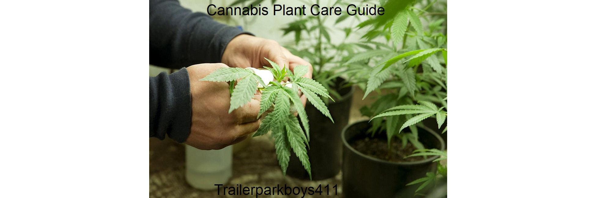 Cannabis Plant Care Guide