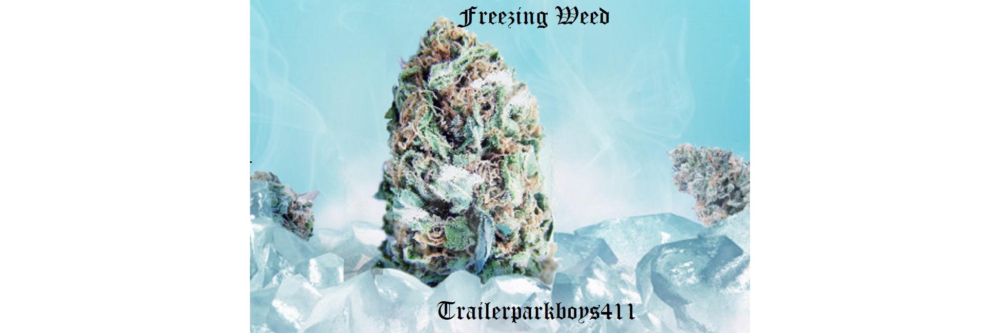 Freezing Weed