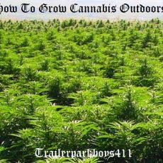 How To Grow Cannabis Outdoors
