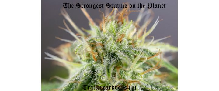 The Strongest Strains on the Planet