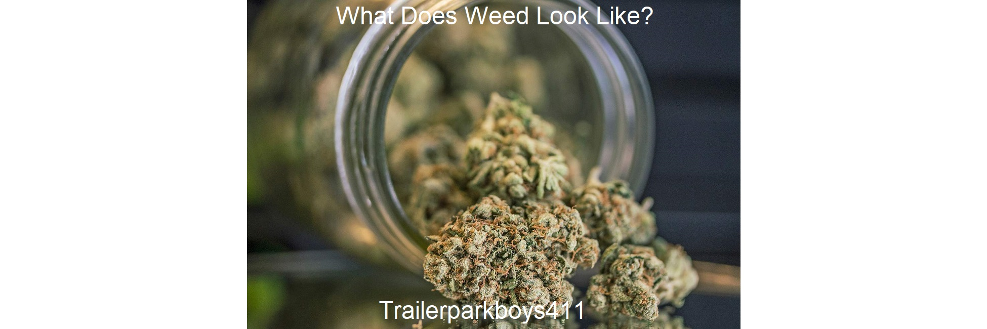 What Does Weed Look Like