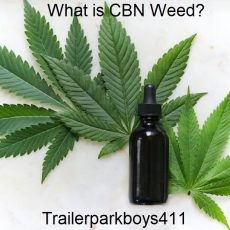 What is CBN Weed