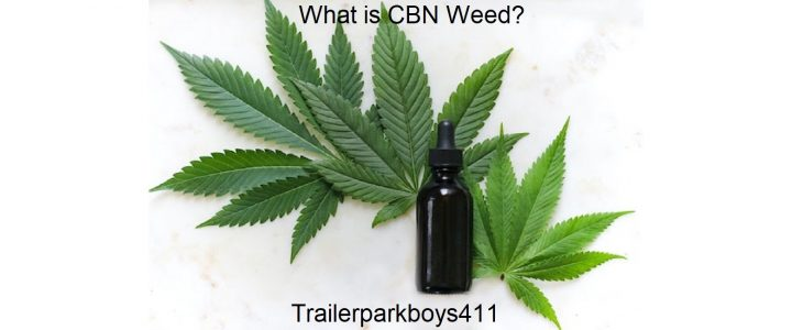 What is CBN Weed?