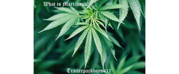 What is marijuana?