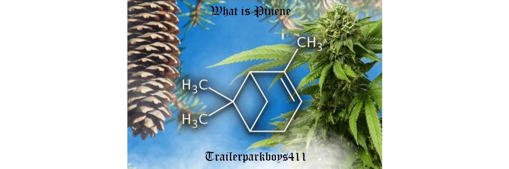 What is pinene